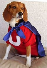 Underdog Costume-I could hardly get the girlfriends to keep their capes on!!! but? a sweater might work?