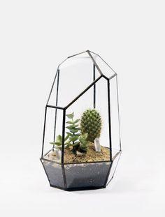 prism cactus garden.