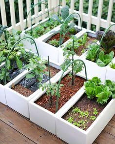 This Gardener Grows 35 Herbs and Veggies on Her Tiny San Francisco Balcony Balcony Garden, Herb Garden, Vegetable Garden, What Are Weeds, Milan Apartment, Wild Animal Park, Best Ikea, Ikea Storage, Outdoor Plants