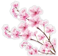 """Sakura Cherry Blossom"" Stickers by Xing7 | Redbubble"