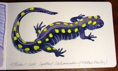30  Fantastic Tattoo Of Amazing Salamander Lizard   Golfian.com
