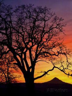 Image result for mt hood hike sunset