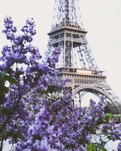 Paris, the Eiffel Tower, and purple flowers. Dreamy shot