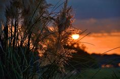 Pampas Sunrise