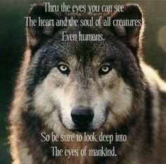 This is telling us humanity is being lost to ur Twitter feed so look into the eyes of the wolfs see if it changes u- The Gray Wolf