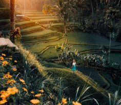 Tegalalang Rice Terraces is one of the main reasons to visit Ubud in Bali. A Walk around the layers of green are an absolute must-do while visiting Bali. Munduk Bali, Bali Yoga, Barbados, Bali Waterfalls, Uluwatu Temple, Gili Air, Gili Island, Rice Terraces, Nature Photography