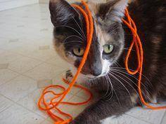 Playtime! #cat #yarn #manx