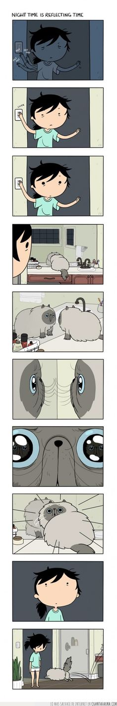 ¿Qué les pasará a los gatos con los espejos?