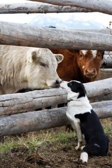 Boop. #farm #animals