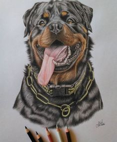 Rottweilers are considered one of the oldest breeds of dogs. Rottweiler Love, Rottweiler Puppies, Chihuahua Dogs, Pet Dogs, Dogs And Puppies, Animal Skull Tattoos, Animal Skulls, Shelter Dogs, Animal Shelter