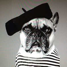 Mayor B is trying to be the Frenchest Frenchie of all time...    http://tmblr.co/ZxHTkxfN4RIR