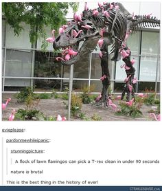 """""""Is it true that the dinosaurs were wiped out by a meteor?"""" """"Yes and no. The meteor managed to land without killing very many of the species. Unfortunately, it happened to be filled with rabid lawn flamingos. They didn't have a chance."""""""