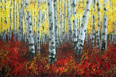 Mystic Forest - Aspen Art Birch Tree Paintings by Artist Jennifer Vranes