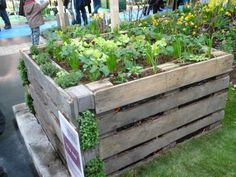 Pallets to the raised garden bed – love these for salad greens / smaller herbs - Garden Design Vertical Pallet Garden, Herb Garden Pallet, Potager Garden, Pallets Garden, Herbs Garden, Permaculture Garden, Gardening, Raised Garden Beds, Raised Beds