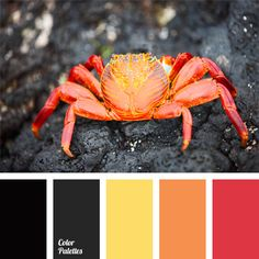 Contrasting combination of scarlet, yellow and orange-red with black and dark shade of asphalt. This color solution can be used for decoration of hall or reception. This color scheme is appropriate both in men's and women's wardrobe. Red Color Schemes, Red Colour Palette, Color Trends, Color Combos, Paleta Pantone, Warm Colors, Colours, Beachy Colors, Inspiration Design