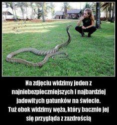 Wtf Funny, Funny Memes, Jokes, Dark Net, Polish Memes, Cool, Best Memes, Funny Photos, Puns