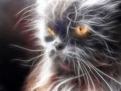 Retrato de Toffee: gato persa europeo, negro,  de ojos naranjas.