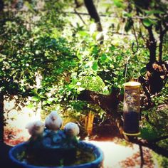 http://cacaustin.com/ You may feed and provide water for the surrounding wildlife, but are you taking the same care with your body? Your immune system benefits from regular #chiropractic care and plenty of nourishing #vegetables and #fruit. Make a green smoothie or have a healthy snack. Next time you care for God's creatures, remember to do something healthy for yourself! #DrGerard #chiropractic Chiropractic Arts Center of Austin, P.C. :: www.cacaustin.com :: (512) 346-3536