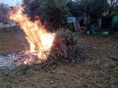 Quemando la poda de los olivos