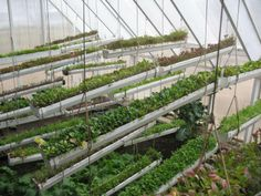 Greenhouse Growing in Cold Climates | Multiple layers of hanging planters allow for intensive planting ...