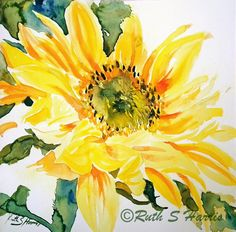 Square Sunflower - Watercolour, ruth s harris