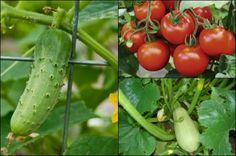 Legume care ne hidratează mai mult decât apa http://www.antenasatelor.ro/curiozit%C4%83%C5%A3i/natura/855-legume-care-ne-hidrateaza-mai-mult-decat-apa.html