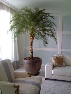 Space saving Indoor Gardens DIY Ideas is part of Diy planters indoor Either you like home gardening or not but after reading my this article you will be loving home gardening as much as we do As we - Indoor Planters, Diy Planters, Outdoor Plants, Outdoor Spa, Indoor Gardening, Indoor Palm Trees, Indoor Palms, Inside Plants, Big Plants