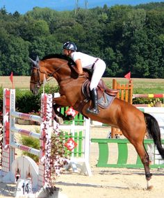 Show Jumping in Crassier, August 2012