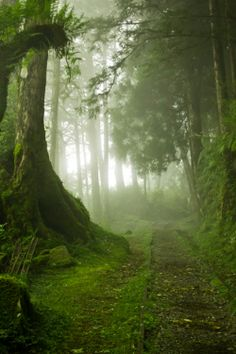 I think part of the forest will look like this in Wonderland. Although there will be lush green all around Alice, there will be a sort of ghostly, sinister, and supernatural that will encompass her. Everything in the kingdom will have eyes and ears, working just for the Queen (by force, most likely, of course). Although there will be light, Alice will be encircled by a feeling of unrest. Perhaps the Cheshire cat will appear somewhere around here.