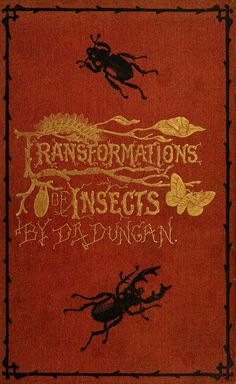 Transformations of Insects... Dr. Duncan  1870