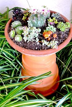 """4 graduated clay pots (14"""", 12"""", 10"""" and * 1/2"""") serve as bottom to a terra cotta saucer filled with succulents..."""