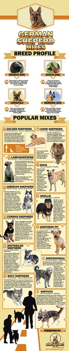 Are you thinking of welcoming a German Shepherd into your family?  Read more here https://www.shepped.com/
