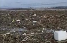 Πιερία: Το απόλυτο χάος στις παραλίες της Πιερίας μετά την... How To Dry Basil, Herbs, Outdoor, Outdoors, Herb, Outdoor Games, The Great Outdoors, Medicinal Plants