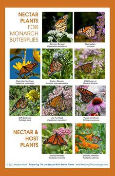 http://www.beautifulwildlifegarden.com/best-nectar-plants-for-monarchs-and-other-butterflies.html