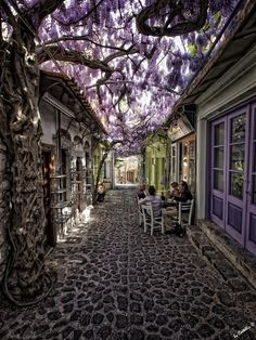 under the purple blossoms, Molyvos, Lesvos, Greece. How beautiful is this place!!! Hope i'll be there one day ...