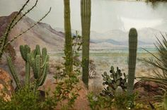 Heather McDonough. desert, cacti, landscape, bleached, arid, mountains, nature, journey, adventure, 4 X 4,