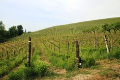 #ItaliainVino 7a tappa: Il primo piede in Monferrato ~ Viaggi e Delizie