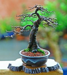 I want to grow one of these and name it Groot! Bonsai Tree Care, Bonsai Tree Types, Indoor Bonsai Tree, Bonsai Wire, Bonsai Plants, Bonsai Garden, Mame Bonsai, Plantas Bonsai, Bonsai Styles
