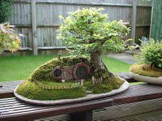 Hobbit bonsai