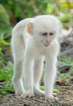 Pretty cute - Oh I took a bath in bleach!