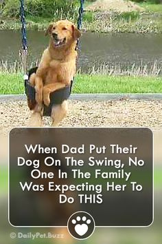 Dogs - Golden Retrievers are really just big kids dogs dogvideos pets video animals animalvideos via Funny Animal Videos, Cute Funny Animals, Funny Animal Pictures, Cute Baby Animals, Funny Dogs, Funny Videos, Pet Dogs, Dogs And Puppies, Dog Cat