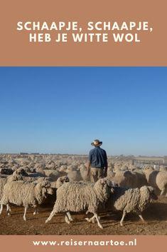 Als je alle schapen van schapenboer Doug Twigg in Victoria, Australië telt, weet je zeker dat je in slaap valt. Het zijn er namelijk zo'n 5.000! Het scheren duurt zeker een week. Wij waren er een paar dagen bij.  #reisblog #reizen #australië Victoria