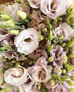 Rose Like Flowers, Fresh Flowers, Wedding Flowers, Fall Flowers, Cut Flowers, Cut Flower Garden, Cut Garden, Garden Pots, Shrubs For Landscaping