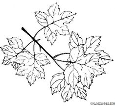 coloring page Leaves on Kids-n-Fun. Coloring pages of Leaves on Kids-n-Fun. More than coloring pages. At Kids-n-Fun you will always find the nicest coloring pages first! Leaf Coloring Page, Food Coloring Pages, Sports Coloring Pages, Butterfly Coloring Page, Alphabet Coloring Pages, Cartoon Coloring Pages, Disney Coloring Pages, Mandala Coloring Pages, Christmas Coloring Pages