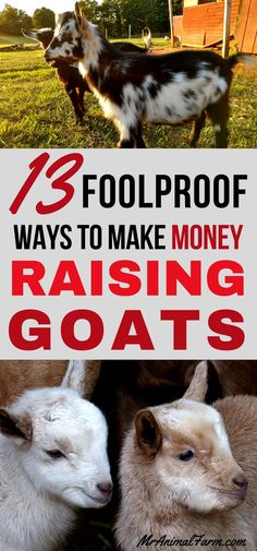 If you have goats (or maybe just want them) you have probably asked yourself, Can you make money raising goats? Not only can you make money raising goat, here are 13 FOOLPROOF ways to make money raising goats! Raising Farm Animals, Raising Goats, Raising Chickens, Keeping Goats, Bee Keeping, Mini Goats, Goat Shelter, Goat Pen, Goat Care