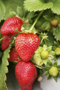If strawberries are your favorite fruit, you're not alone!