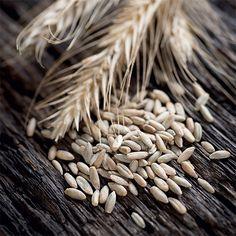 Grain   Casa di Vita
