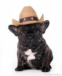 'Hee Haw' French Bulldog.