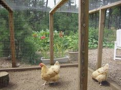 Chicken enclosure