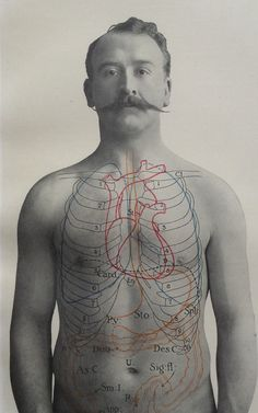 Antique 1900s Medical Diagram Scientific Print Human Anatomy Stomach Bowels 1908 | eBay
